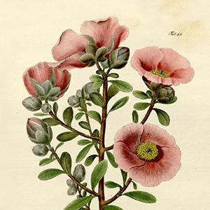 Destaque-Flora